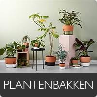Musthaves Plantenbakken
